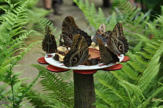 L'Ile aux Papillons : 300Andrei