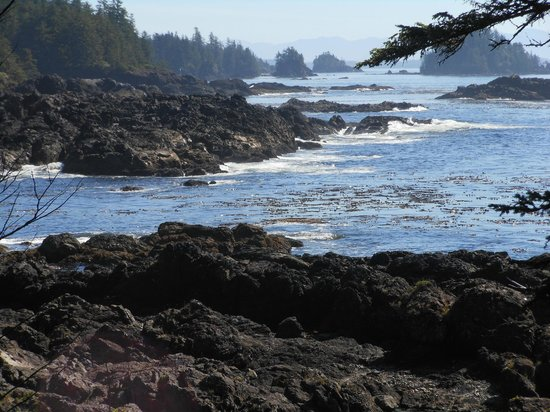 Wild Pacific Bed and Breakfast : View from nearby trail