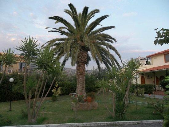 Zervas Apartments: lovely garden