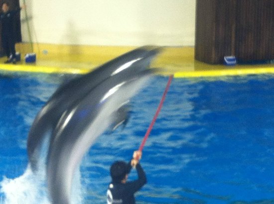 Fakieh Aquarium: Dolphin Show