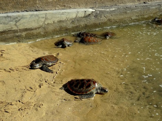 Turtle Conservation and Education Center (TCEC)