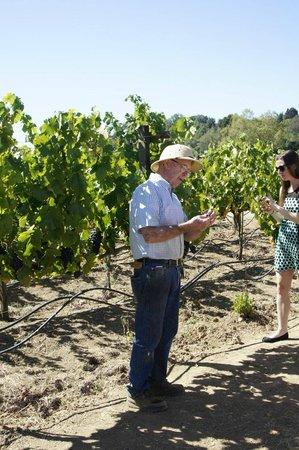 Hendry Ranch Wines : Hendry Vineyards