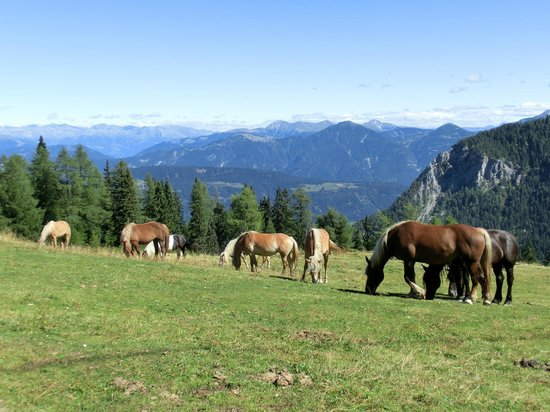 Alpenhotel Marcius: Passeggiate