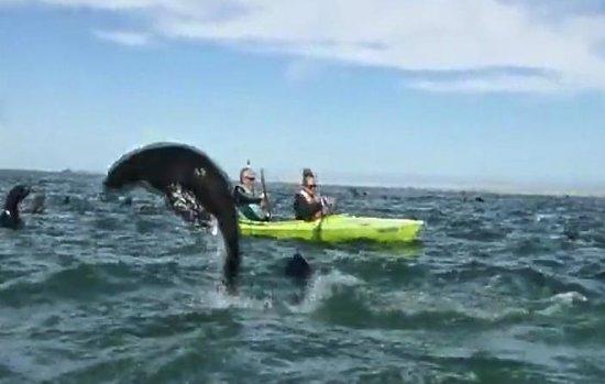 Eco Marine Kayak Tours: Seals Walvis Bay