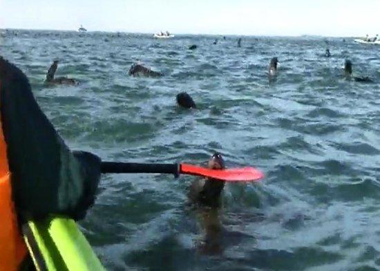 Eco Marine Kayak Tours: niblle paddle
