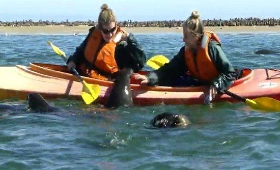 Eco Marine Kayak Tours: trying to get in kayak