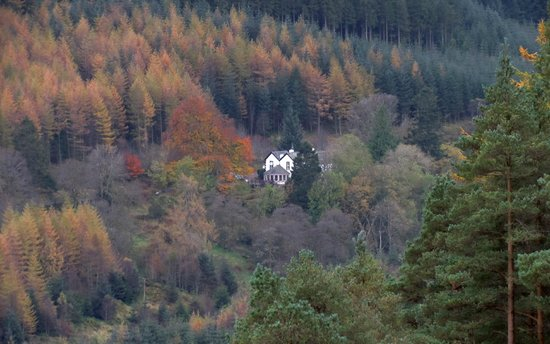 The Cottage in the Wood: 'The Cottage' in Autumn