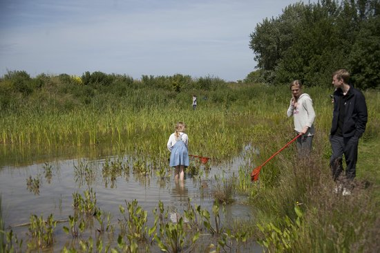 Nethergong Nurseries Camping: Getting down and muddy with the frogs