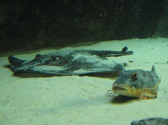 Aquarium Marin De Tregastel : Aquarium marin de Trégastel