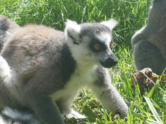 جيجل, الجزائر: zoo jijel