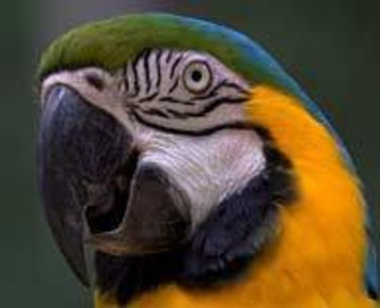 Merced Fruit Barn: Lola, one of the 4 parrots