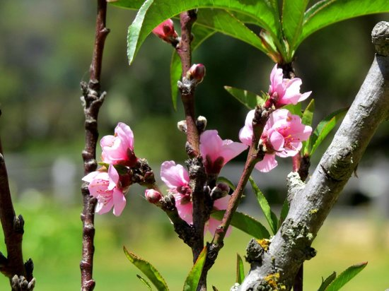 Hotel Campestre Hacienda Yanamarca: Floreciendo