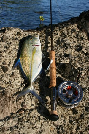 Nukubati Private Island: Bluefin trev on the fly