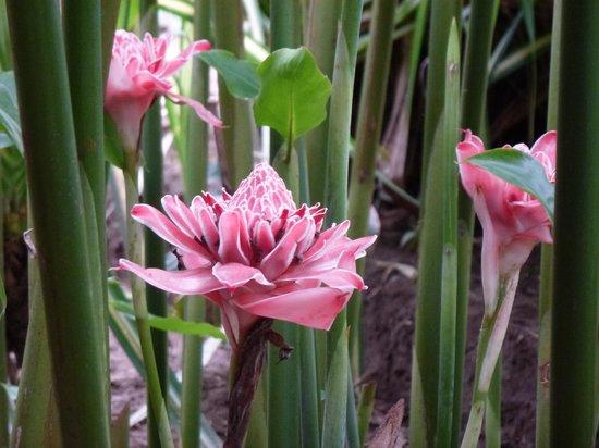 Playa Negra Guesthouse: Le jardin