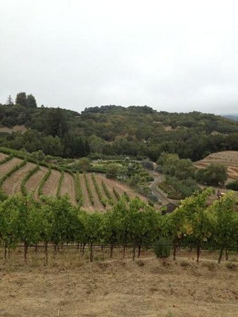 Benziger Family Winery: hill top view
