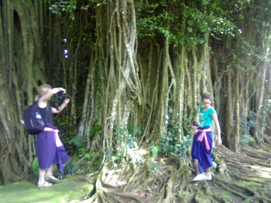 Countryside Exclusive Stop Points Banyan Tree At Kehen Temple