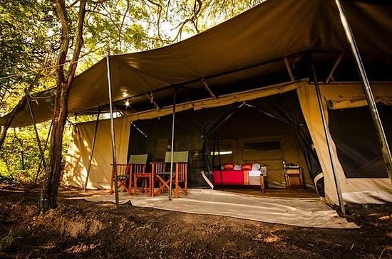 Mbugani Camps Tent Camp : Camping with all the comforts of home