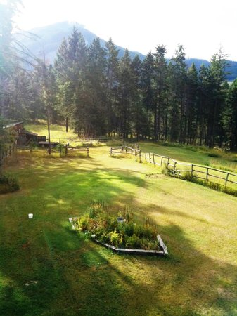 Kicking Horse Canyon B&B: Early morning light.