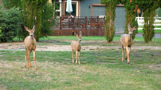 Run of the River: Three of the Six Deer