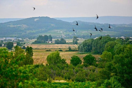 Les Trois Sources : swallow from window