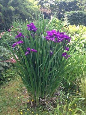 Achill Secret Garden: garden