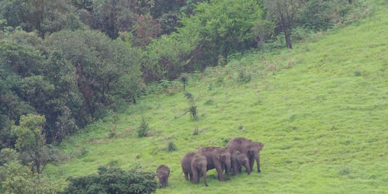 Kabbe Holidays: Coorg Wildlife