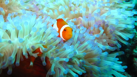 Thalassa PADI Dive Resort : Nemo is everywhere...