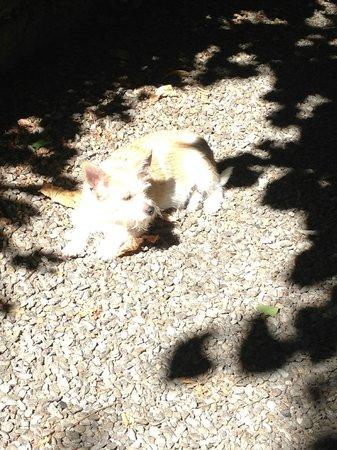 Relais Villa Antea : Marta the resident dog