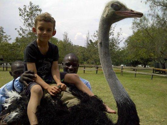 Maasai Ostrich Resort: riding an ostrich