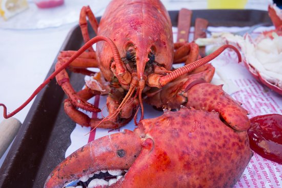 The Crab Claw: Lobster