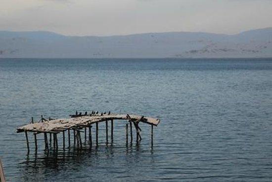 Kongsfjord Gjestehus: Resting birds