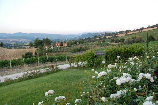 Locanda Palazzone: The property.