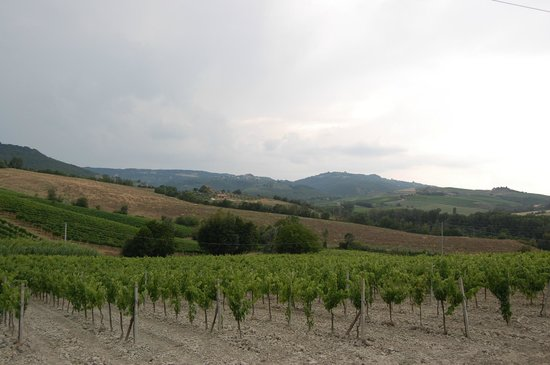 Locanda Palazzone: Winegrounds at the property.