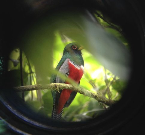 Maquipucuna Reserve: An actual picture through Arsenio's scope, which he took using my iPhone