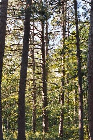Wilderness State Park: Along the Nebo Trail