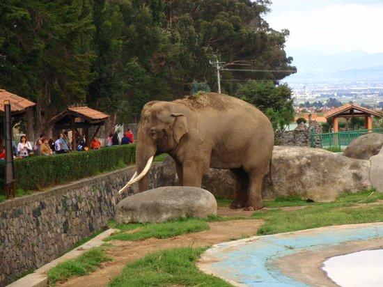 Zoologico Zacango : Muy bello el elefante