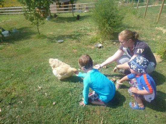 Peyrenegre Gites : Feeding the chickens