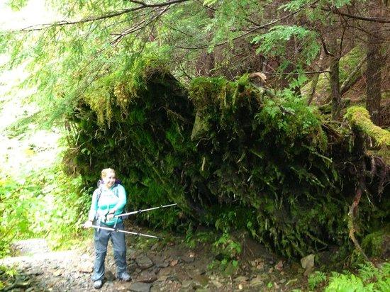 Deer Mountain Trail: Moss moss everywhere
