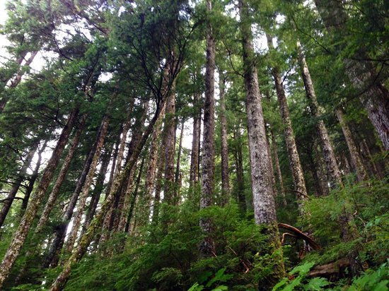 Deer Mountain Trail: Brautifyl views of woods