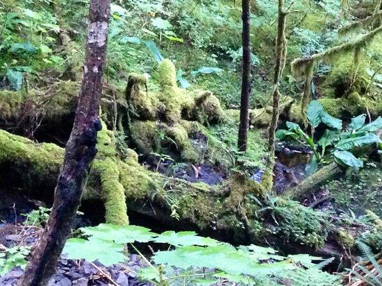 Deer Mountain Trail: More beauty