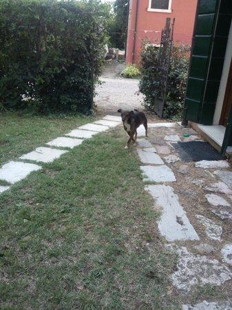 Agriturismo Elfio: cane della proprietaria; isterico, abbaia a tutti gli ospiti