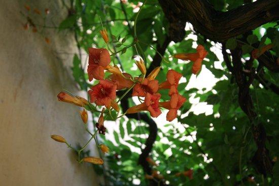 Da Capo Ristorante Pizzeria: flowers covering our balcony