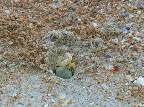 Si Como No Inn: My dogs first sand crab