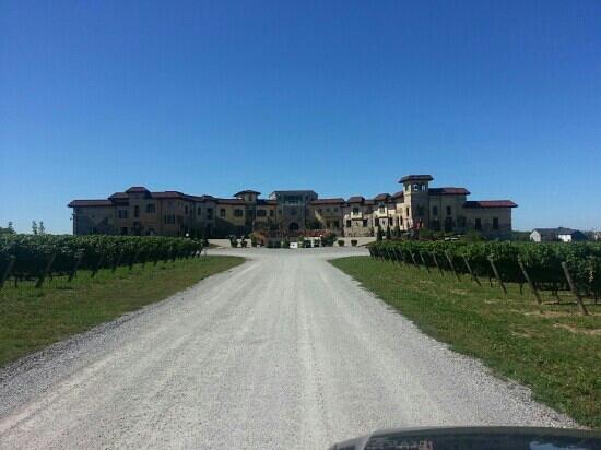 Colaneri Estate Winery: impressive!