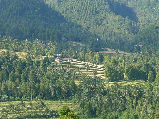 Puri Lumbung Cottages: Aussicht vom Restaurant