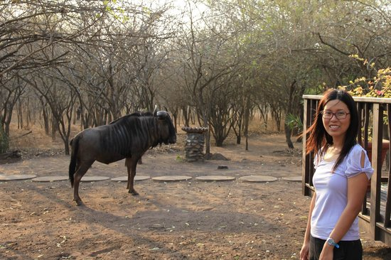 Needles Lodge: Me with the blue wildebeest