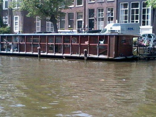 De Poezenboot: Casa flotante de gatos