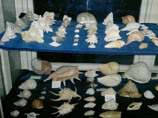 Varna Aquarium - Bild von The Aquarium and the Black Sea Museum, Varna ...