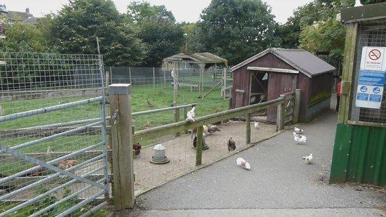 Emsley's Farm Shop: General View