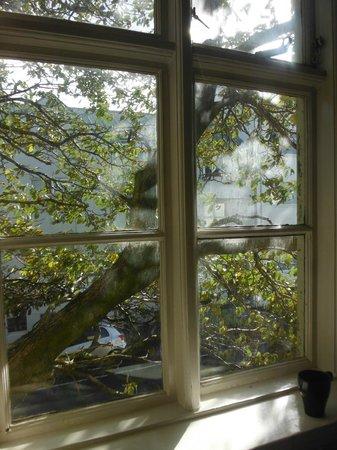 House of the Spirits : Un beau gros arbre, en Islande, ce n'est pas rien!
